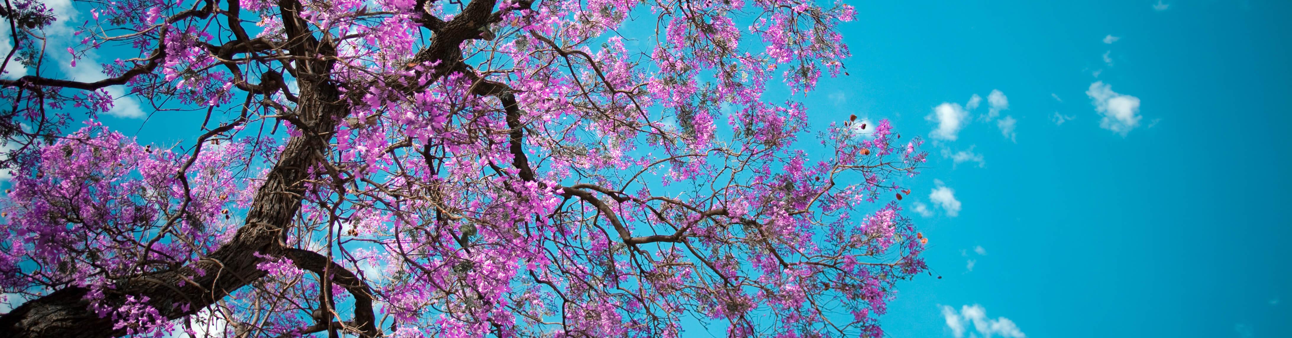 blossums (1)